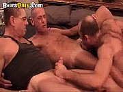 three daddy bears deepthroating – Gay Porn Video