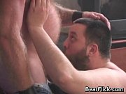 Gay bears having hardcore blowjob sex gay porn