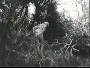 Lorna - Russ Meyer 1964 Sex, choto meyer sex video Video Screenshot Preview