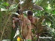 Gatos Brasileiros – Jungle Cruisers