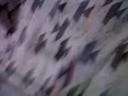 Panameña,lapecilla,pajisa