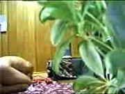 GADIS GIAN SANGAT, gadis melayu gersang Video Screenshot Preview