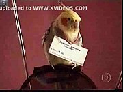 viviane araujo - a loira do pagode view on xvideos.com tube online.