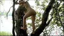 Avina tree by assessor
