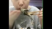 pererecas várias comendo Asiática