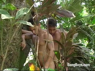 Vídeos Gratis Gay Gatos brasileiros - jungle cruisers