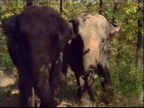 Queen of the elephants 9
